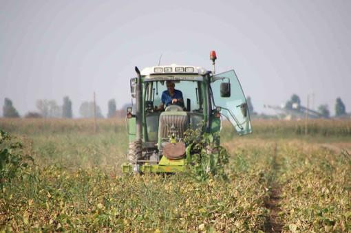 """Agricoltura, Lega: """"Attualizzare i criteri di ripartizione dei fondi europei per non penalizzare il Piemonte"""""""