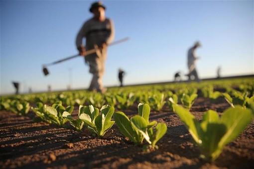 Agricoltura: il punto sulle emergenze fitosanitarie in Piemonte