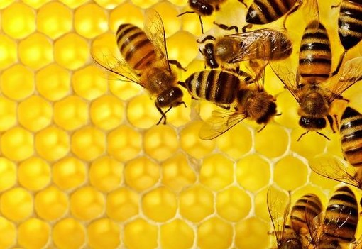 """Uncem con Aspromiele: """"Preoccupati per la produzione di miele in calo e per la moria di api"""""""