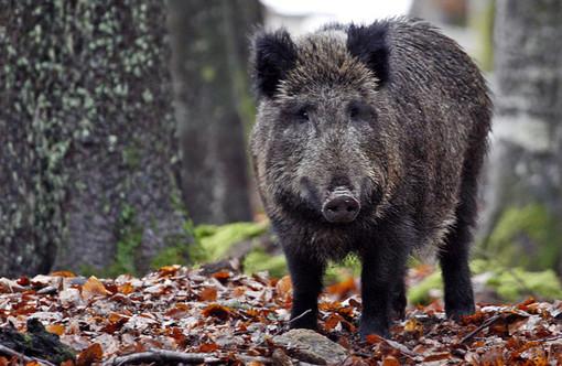 """Zona Arancione, Coldiretti: """"Consentire la caccia oltre i confini comunali"""""""
