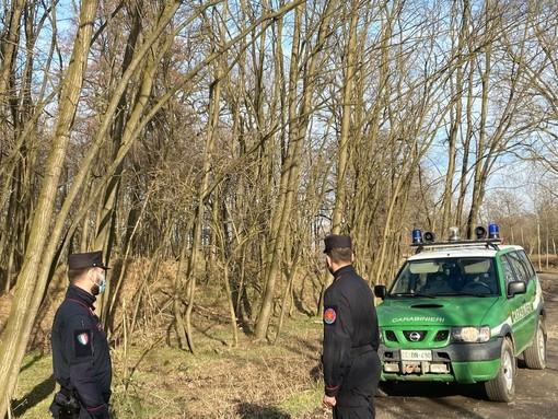 Causa un incendio in un vasta area protetta nel novarese, denunciato dai Forestali