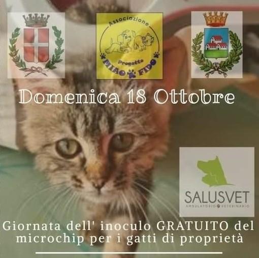 Domenica Microchip gratuiti per i gatti di Trecate