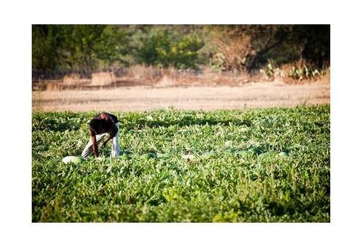 La Confederazione Italiana Agricoltori chiede sanatoria per irregolari e immigrati che lavorano nei campi