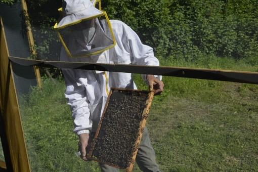 Coldiretti: con il clima impazzito addio a 1 vaso di miele su 4