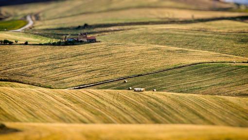 Nominati i rappresentanti novaresi del 'Tavolo del Partenariato agroalimentare e rurale'