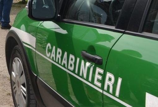 Rifiuti industriali non tracciati, i Carabinieri Forestali sequestrano una ditta di Paruzzaro