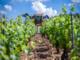 Agricoltura, dalla Regione 3 milioni per le reti antigrandine