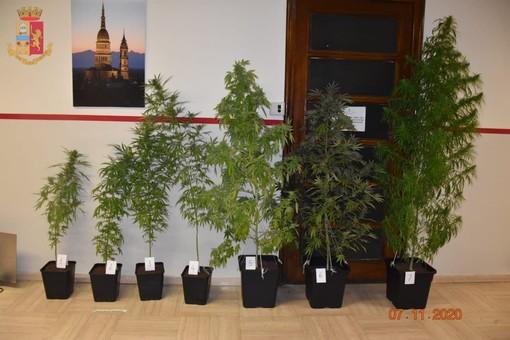 Droga: doppio arresto della Questura di Novara