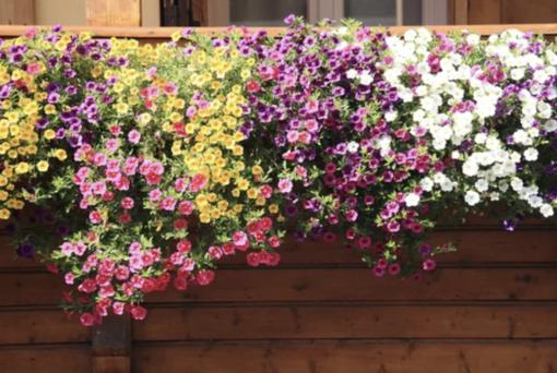 """Borgomanero, a settembre il concorso """"Balconi fioriti e vetrine settembrine"""""""