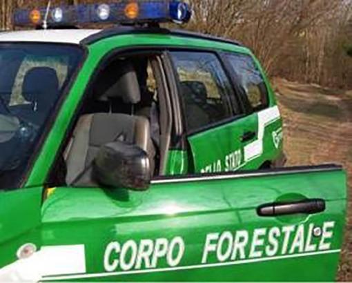 Daini e cervi per uso alimentare: i forestali sanzionano 21 allevamenti nel novarese