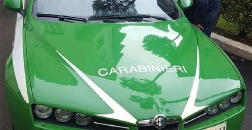 Tagliavano alberi nell'area ex Bemberg di Gozzano: denunciati dai Carabinieri Forestali