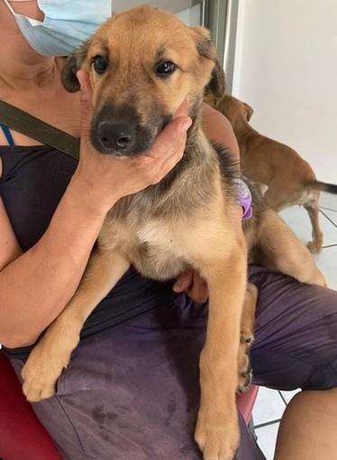 Ettore, il cucciolo di cane da poco adottato da una delle famiglie nella casa di via Bramafame 42 /foto del profilo Facebook di Enpa Torino