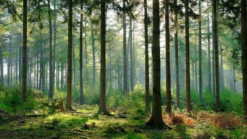 Foreste: cinque video prodotti dalle Regione per parlare della loro importanza