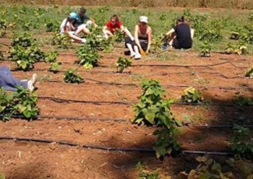 Stagionali agricoltura, pubblicato il bando per l'affitto di strutture abitative