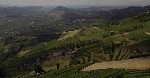 Quali sono i vini delle Langhe più richiesti online