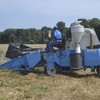 Trebbiatura del grano: per Coldiretti sono necessari nuovi accordi con filiera virtuosa