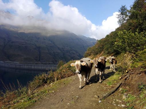 Coronavirus, dalla Regione un sostegno alla filiera lattiero casearia del Piemonte