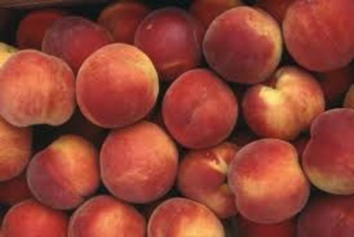 Frutta, Coldiretti avverte: occhio a prezzi e provenienza