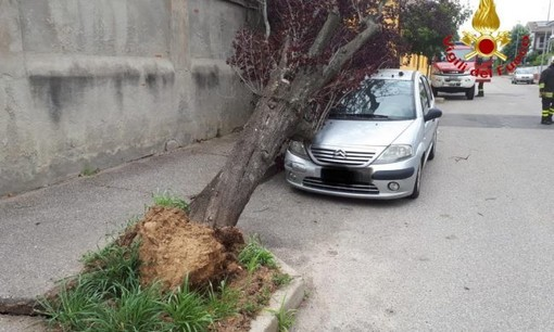 Maltempo: il vento forte di sabato ha causato la caduta di un albero in via Ansaldi nel quartiere Bicocca