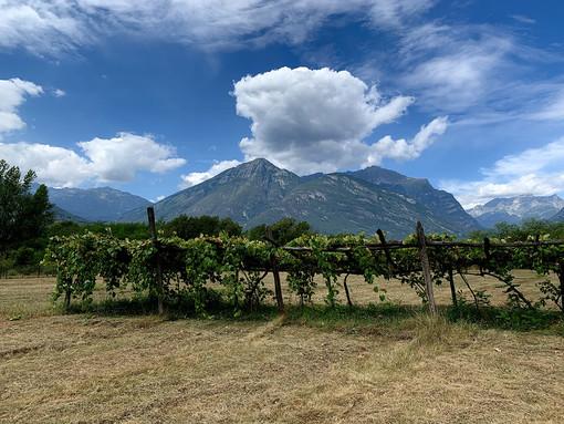 Bose e marcite, alla scoperta delle antiche tecniche agricole tra Ticino e Lago Maggiore