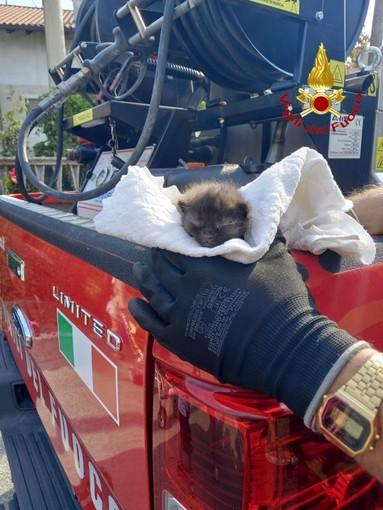 Gattino salvato dai Vigili del Fuoco di Arona